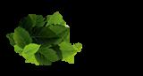logo_PFB-RO-200